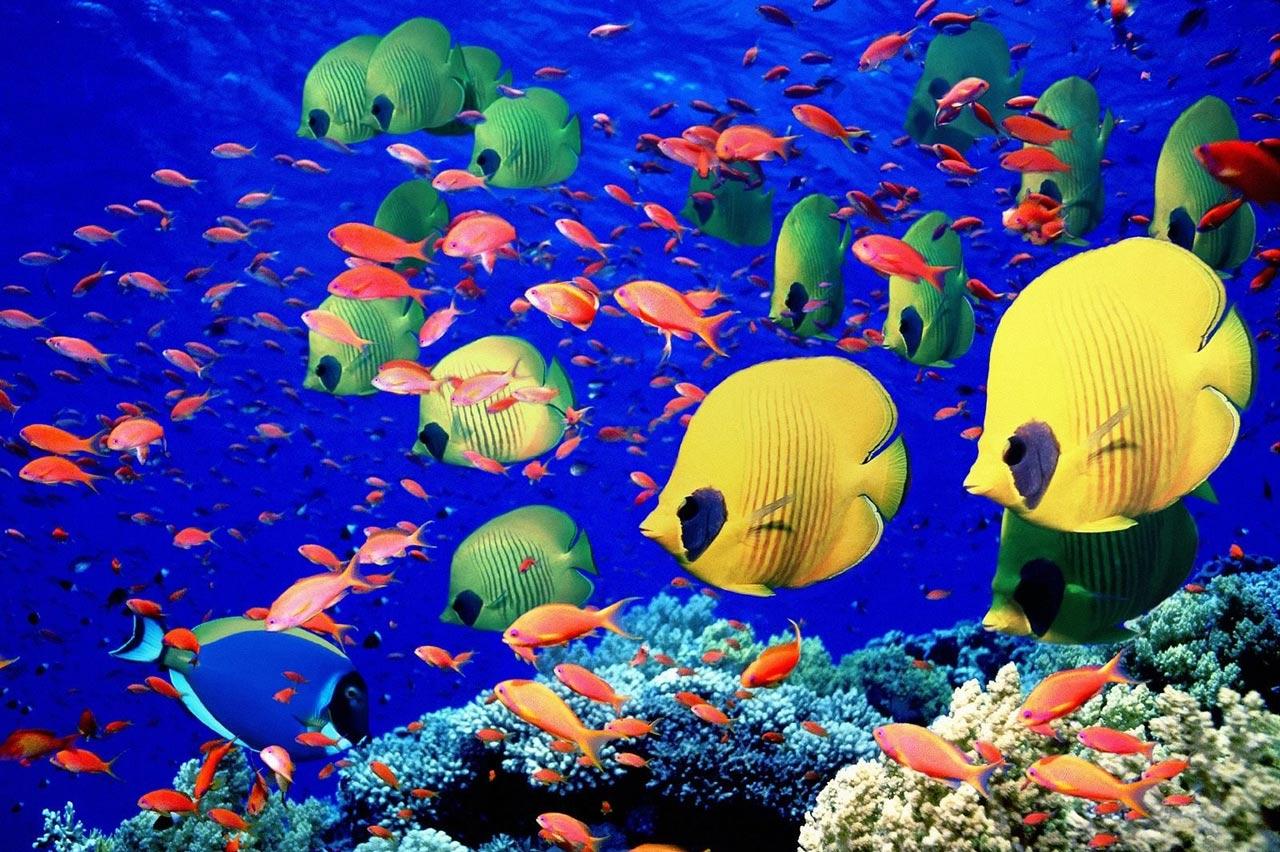 barriera-corallina3